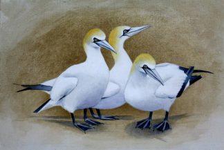 Gannets Acrylic on Canvas